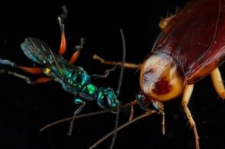 寄生蟲造成的殭屍無所不在,你也可能成為其中之一!