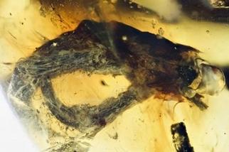 1億年前慘案浮出水面,未成年受害者僅剩腳趾