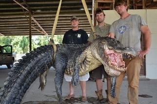 捕獲超級大鱷魚!