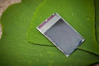 科學家改造細菌,讓陽光直接轉變為液態燃料