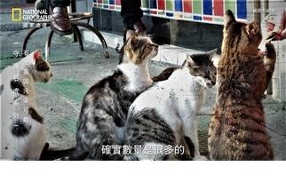 守護石虎系列––家貓對石虎的影響