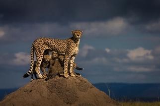 母親與孩子之愛