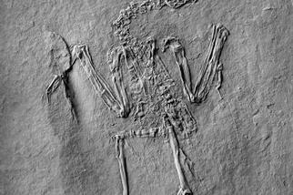 德國發現最早的授粉鳥類