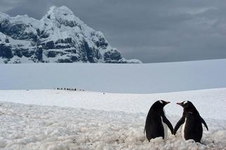 南極:牽手的企鵝