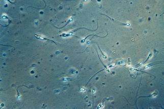 人類精子尾部有令人驚奇的新發現!
