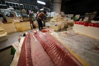 凌晨4點的魚市場