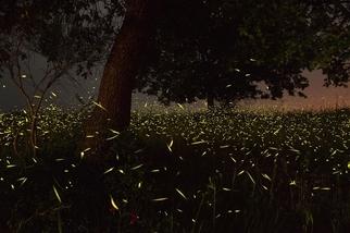 夤夜之輝:義大利螢火蟲