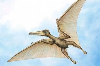 中國發現最古老的翼手龍