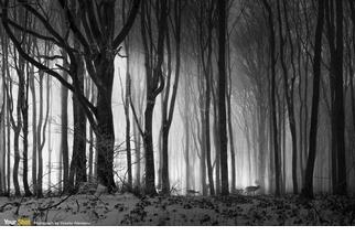 冬天的森林