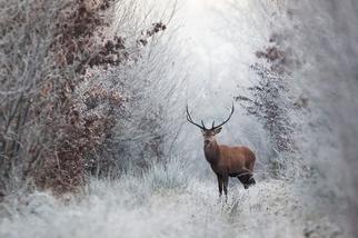 相逢在寒冬:晨鹿