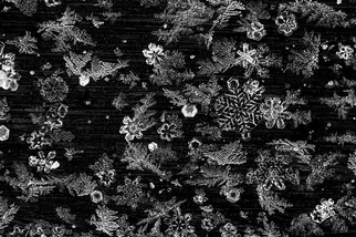 微觀冰晶:剔透玲瓏