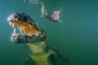 影像藝廊:圖爾卡納湖的危機