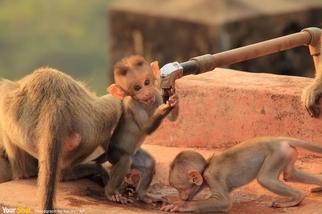 口渴的猴子