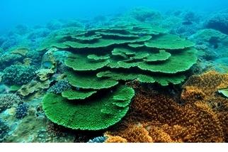 令人驚豔的海中的熱帶雨林