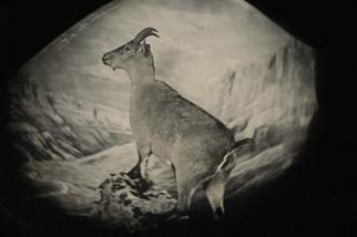 影像藝廊:物種大復興