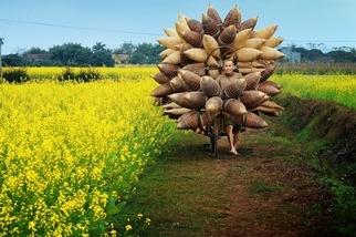 農閒風情:越南魚簍