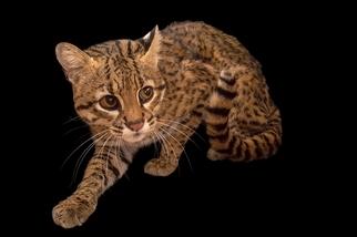 活在陰影下的貓