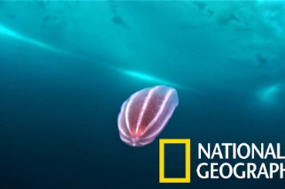 一睹格陵蘭冰帽下方的奇妙生物