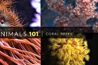 101動物教室:珊瑚礁