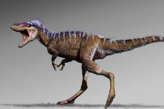 新發現的小不點暴龍,有助於了解暴龍是如何演化成超大尺寸