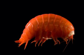 在地球最深的海溝裡,生物正在吃塑膠!