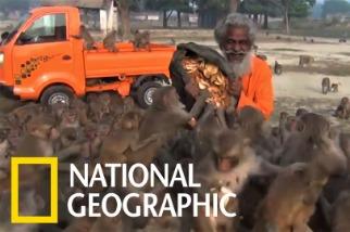 老爺爺帶來了食物,瞬間被猴子大軍包圍!