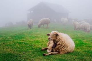 在夢幻的霧中