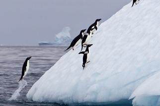 噴氣推進式企鵝