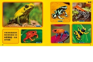 《國家地理小小雨林探險家》漫遊林床-藍色箭毒蛙