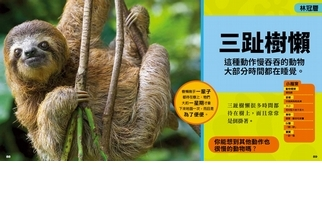 《國家地理小小雨林探險家》三趾樹懶