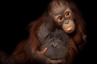 一份聯合國報告提出警告,地球上有數以百萬的物種正面臨滅絕的威脅