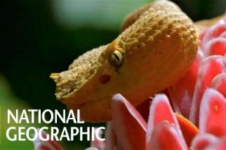 你有聽過蛇的「茄考生氏器」嗎?