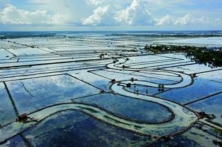 鹽化的農田
