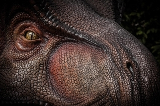 基因研究顯示,霸王龍的嗅覺超驚人!