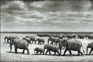 大象與創傷