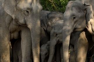 吉姆庫柏國家公園裡的大象家族