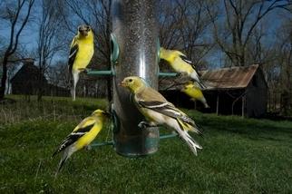 為什麼不該餵食野生動物(或許除了鳥類之外)?