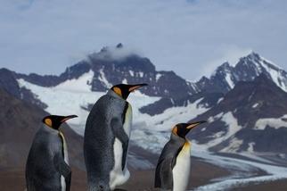 企鵝思索著人生