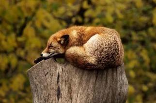 動物為什麼要睡覺?一直醒著會怎樣?
