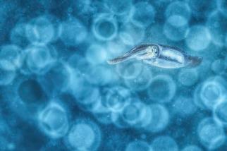 藍色泡泡海