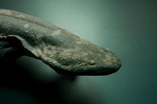 全世界最大的兩生類確認為獨特物種