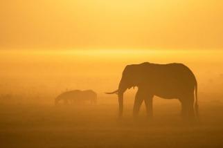 多霧的清晨