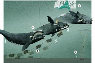 解開鯨魚的枷鎖