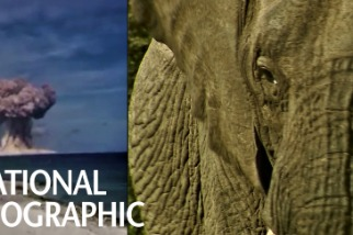 核彈試爆竟有助於保育大象