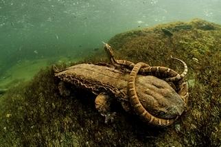 淡水中的脆弱生命