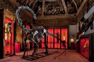房間裡的恐龍