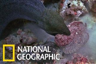 海底戰場: 當鯙鰻對上石頭魚