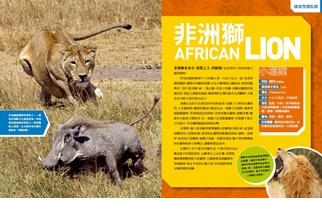《國家地理終極捕食動物百科》非洲獅