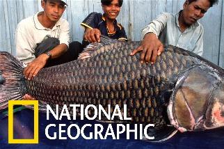 洞里薩湖的魚類大遷徙