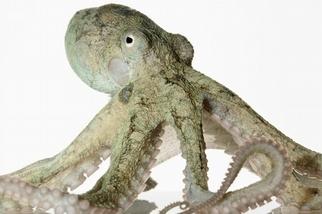 養章魚錯了嗎?